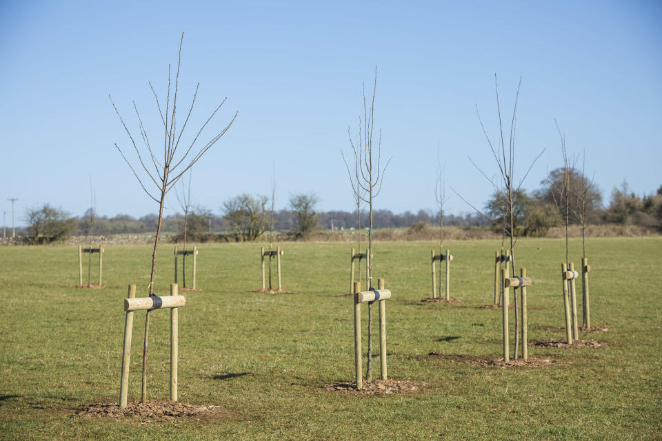 A blossom circle has been planted at Sherborne Estate, Gloucestershire