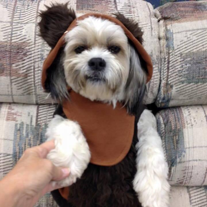 """""""Here is our little Ewok, Gracie,"""" says Pam Miller of East Peoria, Illinois. Baby Yoda has nothing on you, Gracie."""