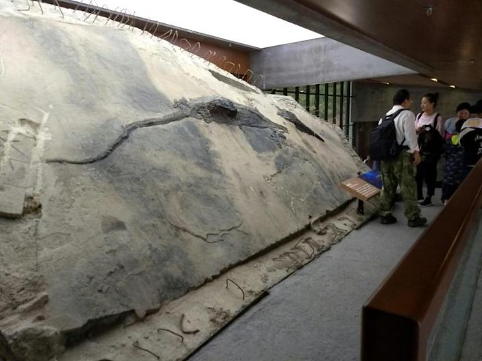 An ichthyosaur specimen with its stomach contents visible as a block that extrudes from its body is displayed near the entrance of the Xingyi Geopark Museum in Wusha District, Xingyi City, Guizhou Province, China