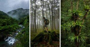 The photo collage are taken at Daxueshan National Forest Recreation Area. (Courtesy of Ryan Heve