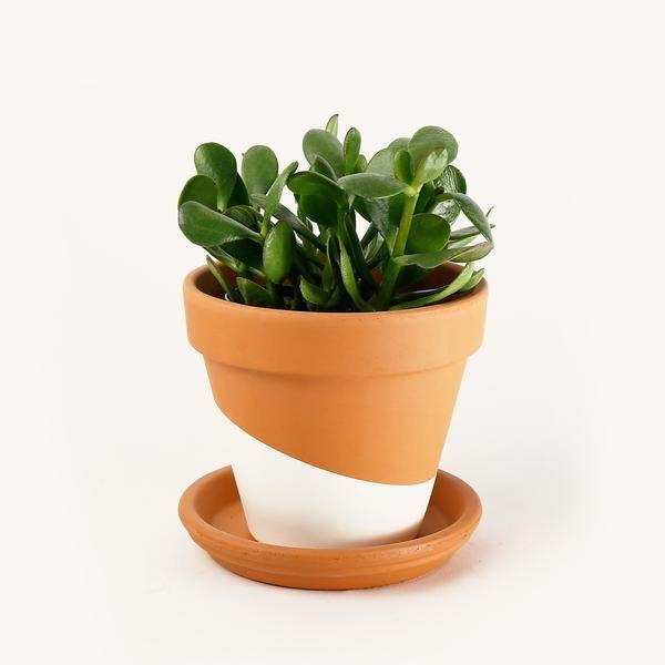 """<p><strong>Hey Horti</strong></p><p>heyhorti.com</p><p><strong>$28.00</strong></p><p><a href=""""https://heyhorti.com/collections/plant-selection/products/jade"""" rel=""""nofollow noopener"""" target=""""_blank"""" data-ylk=""""slk:Shop Now"""" class=""""link rapid-noclick-resp"""">Shop Now</a></p><p>A plant that will literally last you <em>years </em>is this satin pothos, bad boy. It's strong on its own and is very drought-tolerant.</p>"""