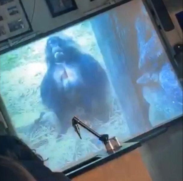 PHOTO: A group of Long Island high school students claims their teacher included racially insensitive images in a class presentation that referenced them as monkeys. (Ray, Mitev & Associates)
