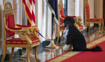 FILE - In this April 22, 2010, file photo Bo, the Obama's family pet, sits in the Cross Hall before an event with first lady Michelle Obama to welcome children of Executive Office employees at the White House's annual take our daughters and sons to work day in Washington. Former President Barack Obama's dog, Bo, died Saturday, May 8, 2021, after a battle with cancer, the Obamas said on social media. (AP Photo/Evan Vucci, File)