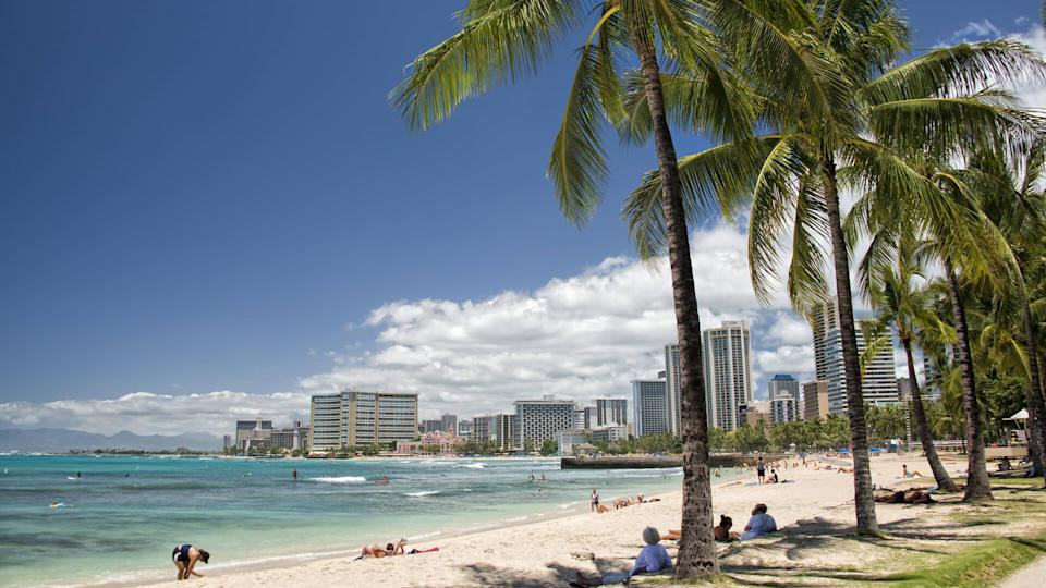 Palm trees along the beach in Hawaii
