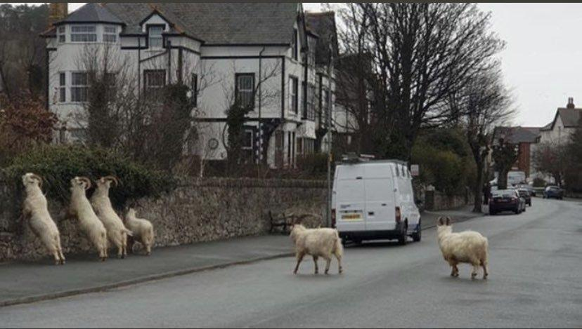A Baaaad Crew Takes Over A Welsh Town