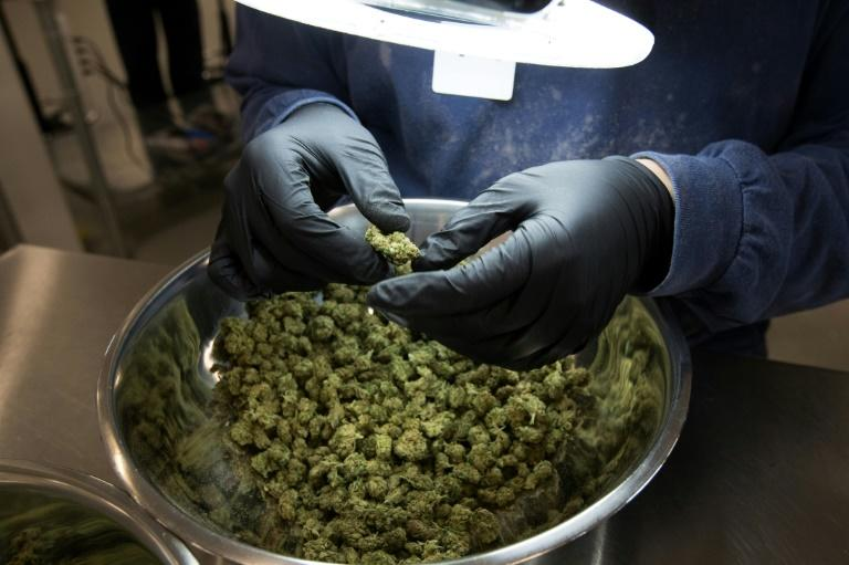 An employee inspect medicinal marijuana by hand at Tweed INC. in Smith Falls, Ontario December 5, 2016