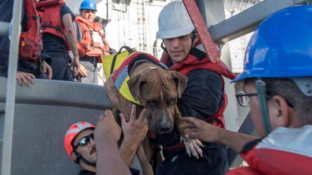 PHOTO: Sailors help Zeus, one of two dogs who were accompanying two mariners who were aided by the amphibious dock landing ship USS Ashland (LSD 48), Oct. 25, 2017. (Mass Communication Specialist 3rd Class Jonathan Clay/Navy)