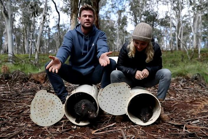 Actors Chris Hemsworth (L) and Elsa Pataky helped release the animals at a sanctuary in New South Wales