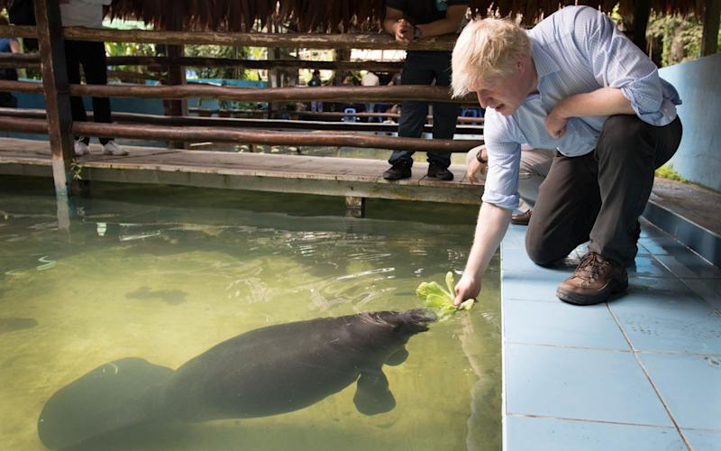 Boris Johnson feeds a manatee - PA