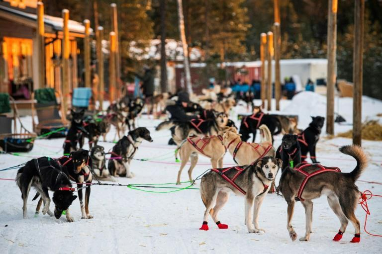 Sledding dogs are expensive to maintain with no tourist revenue coming in