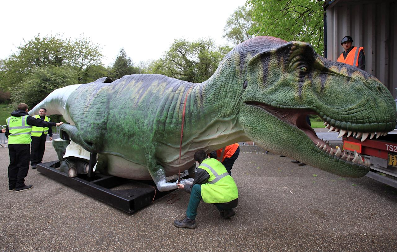 A life size animatronic Tyrannosaurus Rex dinosaur arrives at Bristol Zoo Gardens on May 14, 2012 in Bristol, England. Twelve animatronic dinosaurs arrived at Bristol Zoo Gardens this morning after being transported in crates from Texas, USA. They will form part of the zoo's summer exhibition 'DinoZoo' which opens later this month.  (Photo by Matt Cardy/Getty Images)