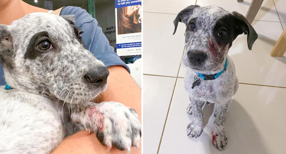 Wally the puppy shown in two photos.