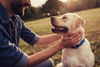 "If it seems like your puppy pal is always aware of your mood, it's because their highly sensitive nose does, in fact, alert them to your emotional state. According to <em>Psychology Today</em>, dogs can not only tell when you're happy, but <a href=""https://www.psychologytoday.com/ca/blog/animal-emotions/201711/dogs-smell-human-fear-and-mirror-our-mood-when-they-do"" rel=""nofollow noopener"" target=""_blank"" data-ylk=""slk:they can also smell human fear"" class=""link rapid-noclick-resp"">they can also smell human fear</a> by picking up ""chemosignals,"" which are body odors produced in human armpits."