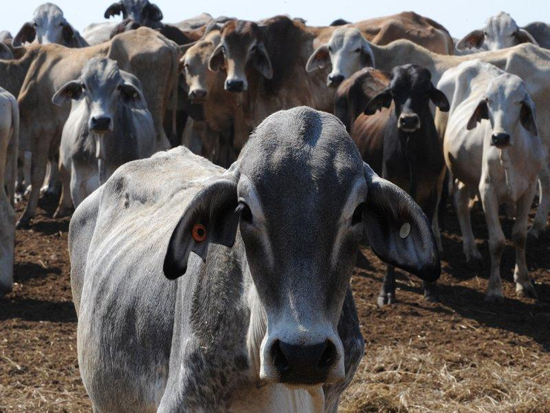 Fears bovine disease may have spread