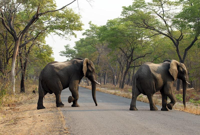 File picture of elephants crossing the road in Hwange National Park, 2015