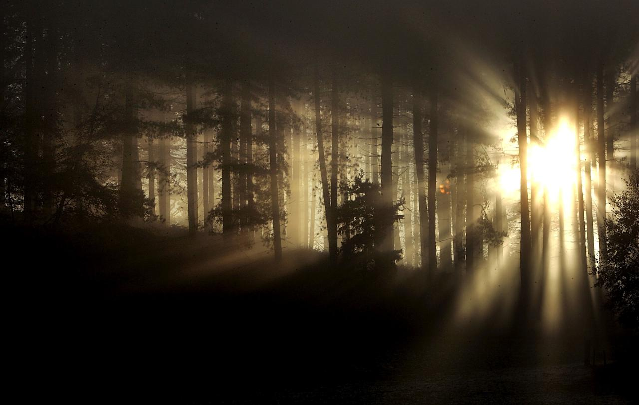 <p>The sun putting in a misty appearance at Cannock Chase in Stafford [Getty] </p>