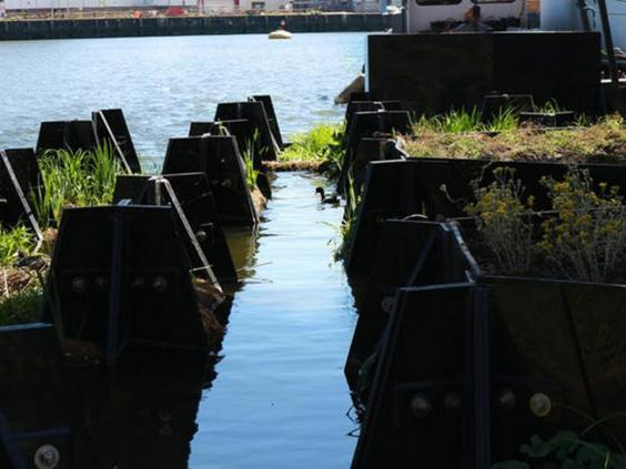 The floating park has provided habitat for waterfowl and insects (Recycled Island Foundation)