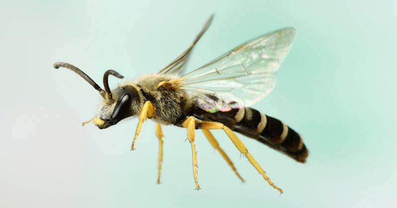 Found, Alive, in Woman's Eye: 4 Bees