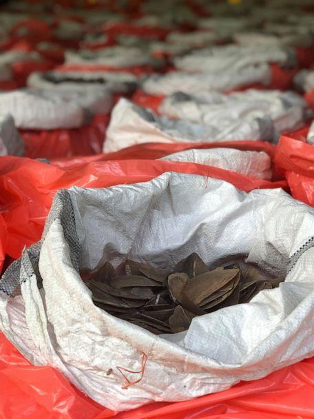 PHOTO: This Monday, July 22, 2019, photo released by National Parks Board shows pangolin scales in bags in Singapore. Singapore has seized nearly 10 tons of elephant ivory and about 12 tons of pangolin scales belonging to around 2,000 of the mammals. (National Parks Board via AP)