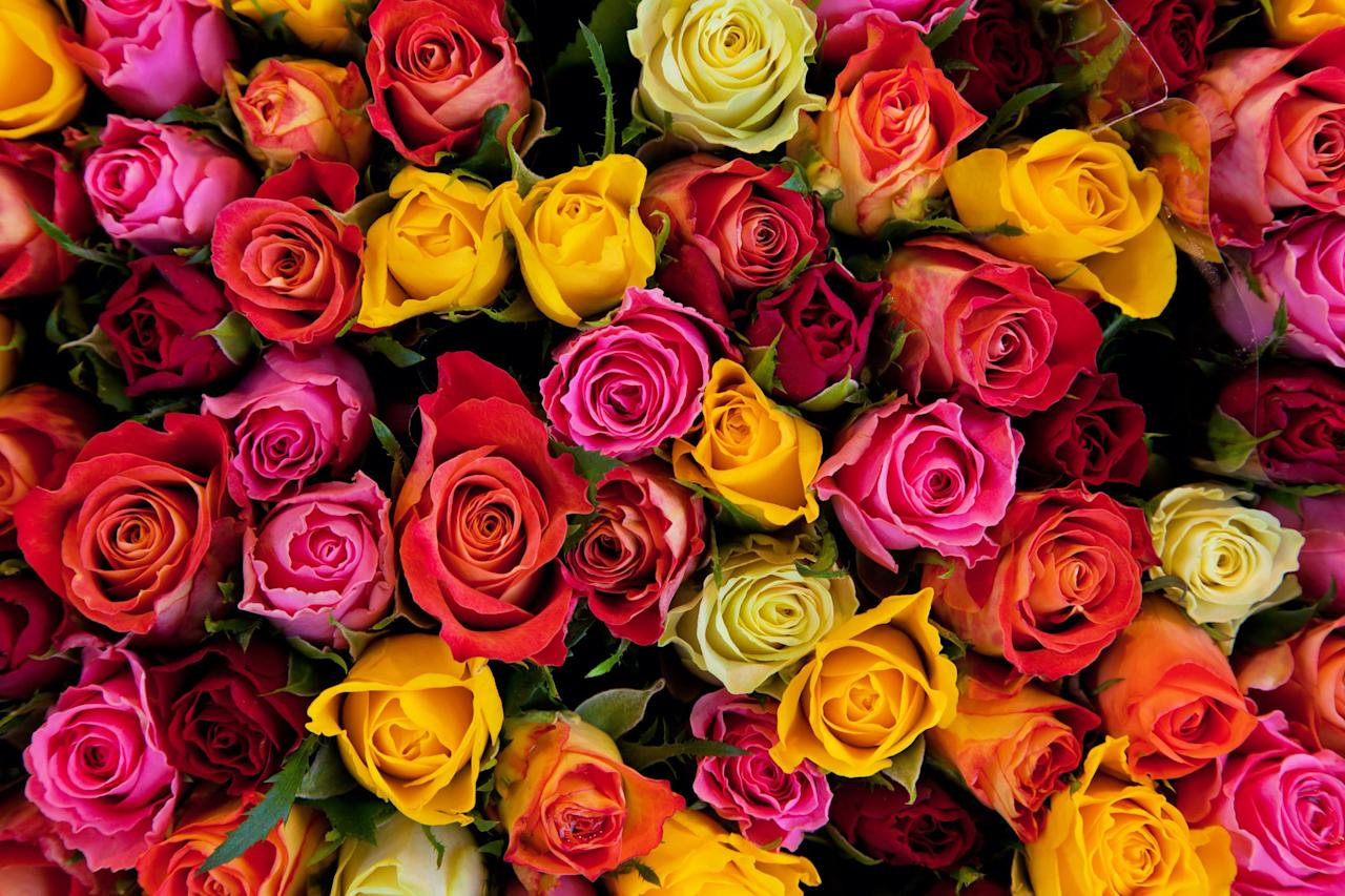 From Pink To Peach The Meaning Behind Every Rose Color Revealed