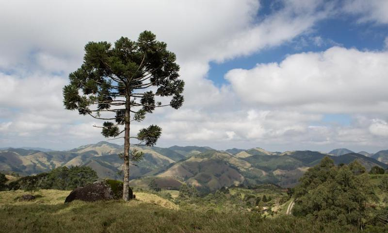 BioCarbon plans to reseed Brazilian forests using drones.