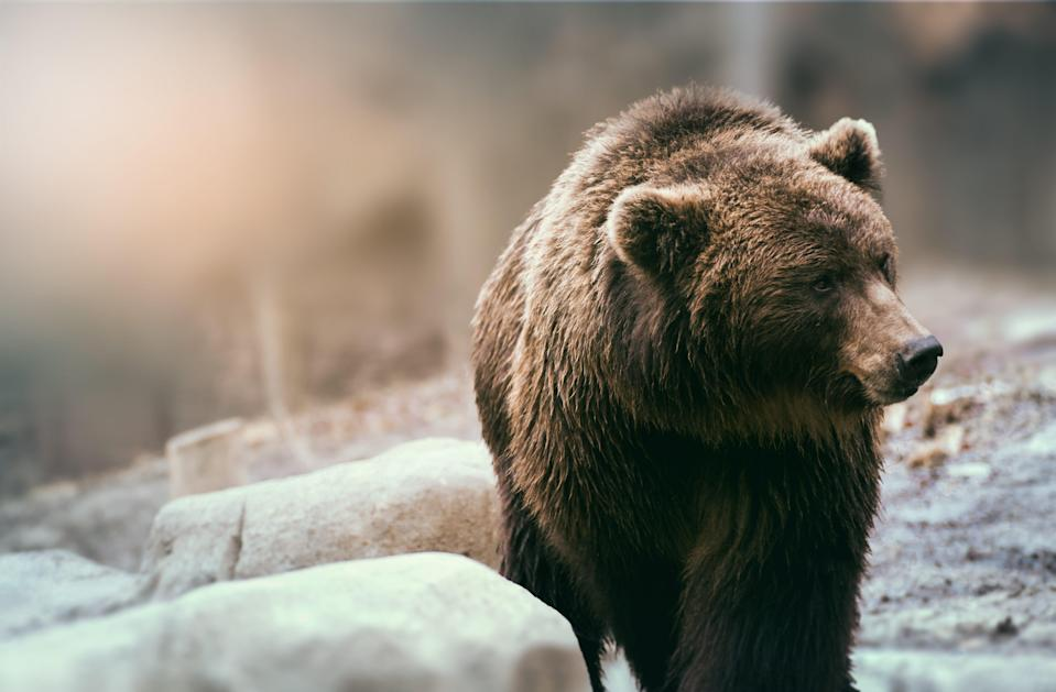 The brown bear was named the deadliest animal in North America.
