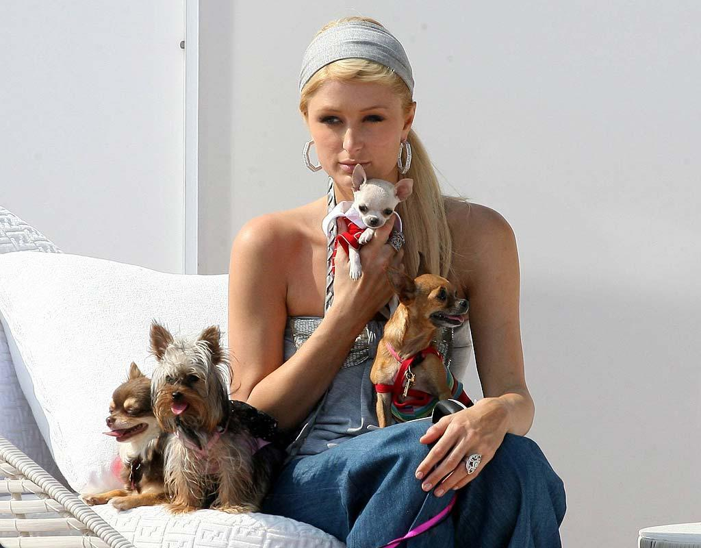 "Has Paris Hilton gone to the dogs since her release from prison? Now that ""The Simple Life"" has been canceled, Hilton is trying her hand at several new projects, including a second album and a role in a musical. <a href=""http://www.x17online.com"" target=""new"">X17 Online</a> - July 31, 2007"