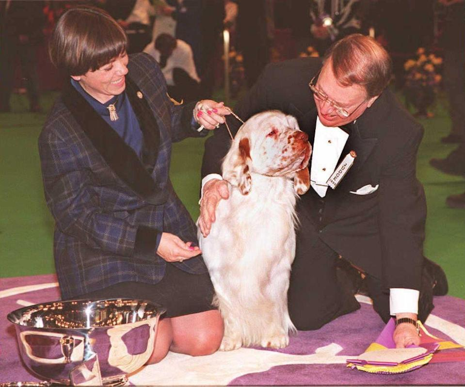 <p>Brady was one of a bunch of doggos competing, but this clumber spaniel outshone all the others.</p>