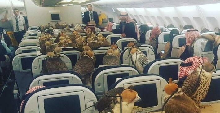 Just loads of falcons on a plane [Lensoo/Reddit]
