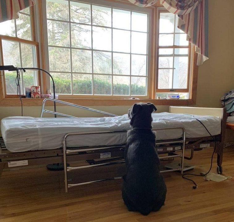 Moose the dog waiting by his recently deceased owner's empty hospital bed.