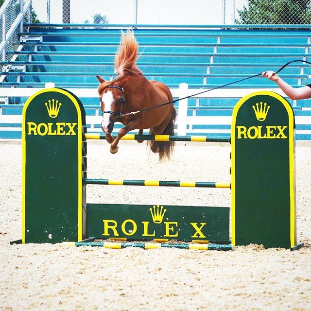 <p>With almost 18,000 followers, Patrick the mini horse has garnered quite the fan base on Instagram. His photos often showcase his impressive tricks, proving that the agility and athleticism of mini horses isn't hindered by their small stature.</p>