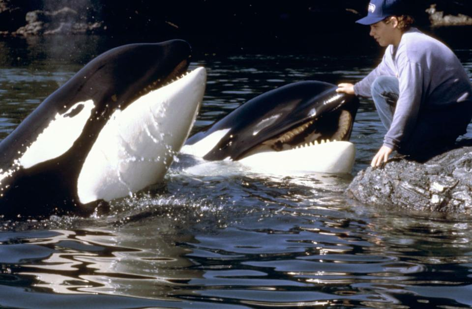 """<p><strong>HBO Max's Description:</strong> """"Since they said good-bye, Jesse and Willy have both become part of their own families: Jesse has been adopted by his foster parents, Glen and Annie Greenwood, and Willy has found his own Orca pod, including his mother and younger siblings, in the seas off the Pacific Northwest. On a camping trip with his foster parents and newly discovered half-brother, Elvis, Jesse finds his old friend, Willy, and the two quickly rediscover the camaraderie that they shared before. But their happy reunion is cut short when an offshore oil spill threatens to trap Willy, his sister and his brother. As the danger moves closer, Jesse must call upon all the trust, loyalty and faith Willy has in him to return Willy, along with his brother and sister, back to their mother in the open seas.""""</p> <p><a href=""""https://play.hbomax.com/feature/urn:hbo:feature:GXdu2TwlYxMPCwwEAADWe"""" class=""""link rapid-noclick-resp"""" rel=""""nofollow noopener"""" target=""""_blank"""" data-ylk=""""slk:Watch Free Willy 2: The Adventure Home on HBO Max here!"""">Watch <strong>Free Willy 2: The Adventure Home</strong> on HBO Max here!</a></p>"""