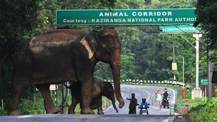 This year's monsoon rains have almost 85% of the Kaziranga park under water