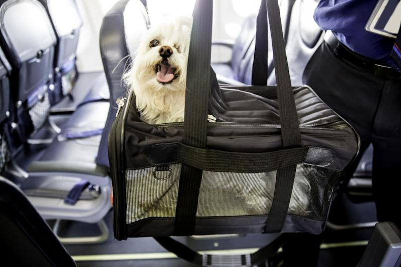 The dog was travelling in a TSA approved carrier similar to this. Photo: getty