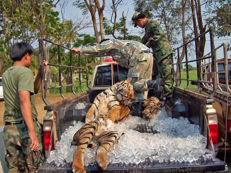 A shipment from the Hydra syndicate, packed on ice and seized in 2008 on it's way to Laos.