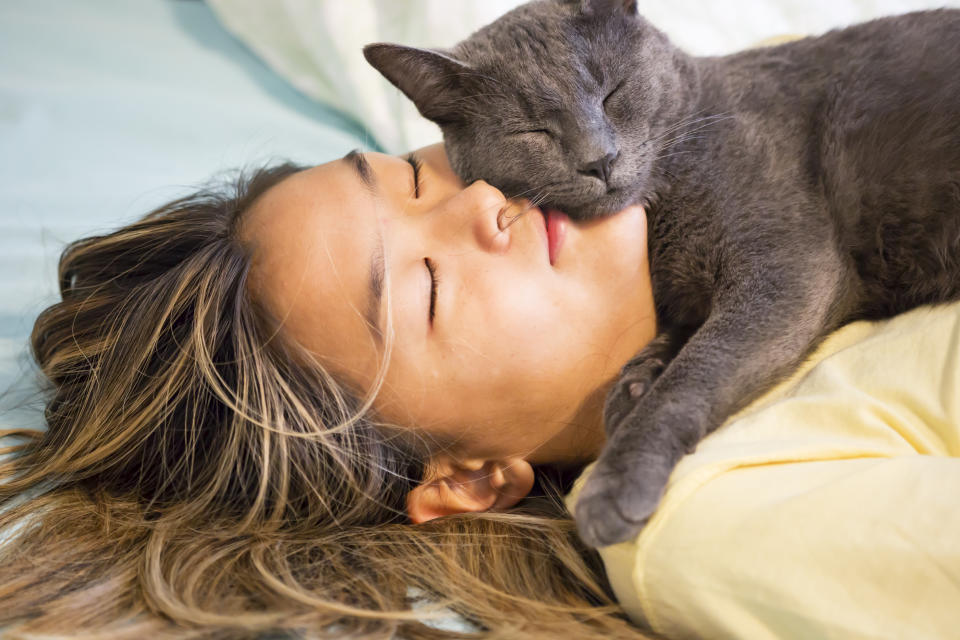 Pet Russian Blue cat sleeps on face of beautiful young girl