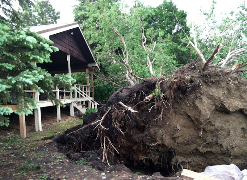 A clump of uprooted trees sits next to a Lake Poinsett cabin after a fast-moving line of strong storms that barreled across northeast South Dakota spawned several tornadoes, Friday, June 21, 2013, at Lake Poinsett, S.D. One woman was killed when her trailer was tossed in the air from the storms. (AP Photo/Tena Haraldson)