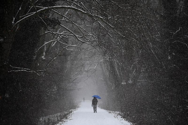 A man walks under snowfall in a forest in Strasbourg, eastern France, on January 10, 2017, as a cold wave hits most parts of Europe