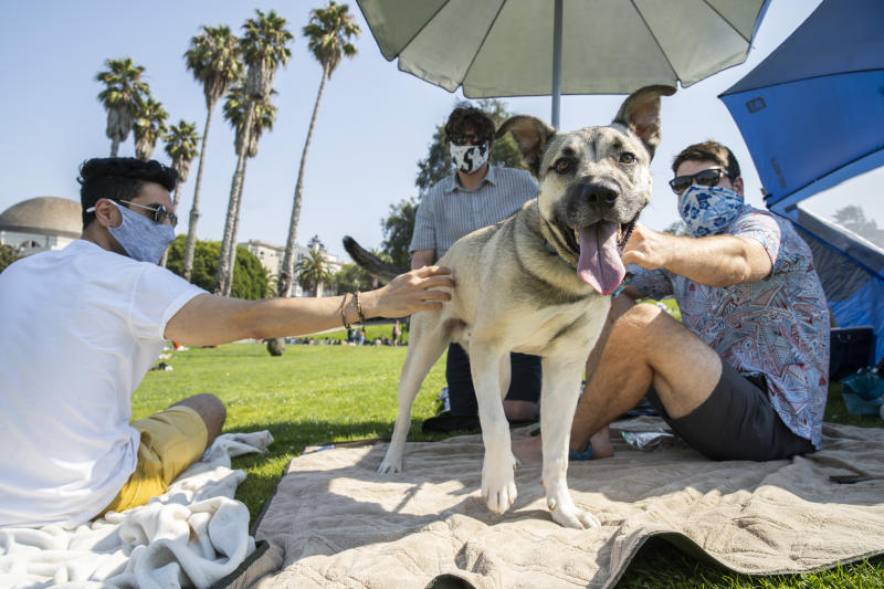 SAN FRANCISCO, CA - SEPT. 5: From left: Soheil Norouzi, Edward Sciaky and Tyler Pate hang out with Arlo the dog during the Labor Day weekend at Dolores Park, Saturday, Sept. 5, 2020, in San Francisco, Calif. Californians experienced a massive heatwave with triple-digit temperatures throughout much of the state, even in the coastal regions. As a result citizens took to the outdoors to escape the heat at beaches and lakes, raising health officials' fears of coronavirus infection spikes. (Santiago Mejia/The San Francisco Chronicle via Getty Images)