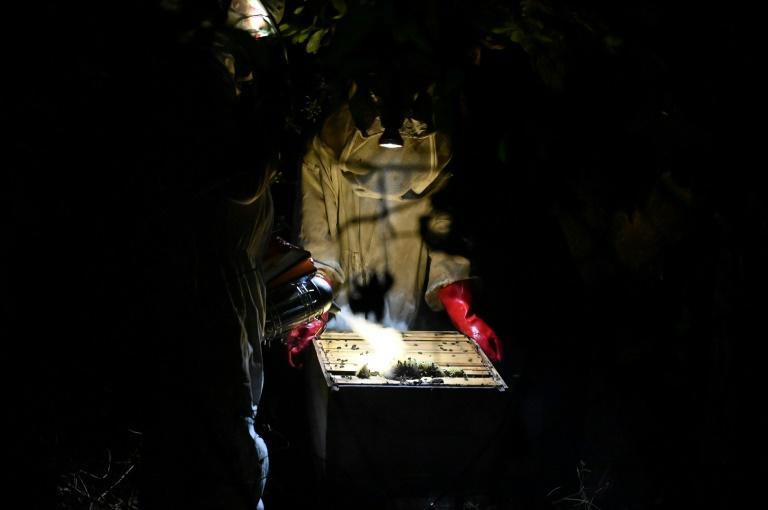 Honey is harvested only at night as the local bees are very aggressive