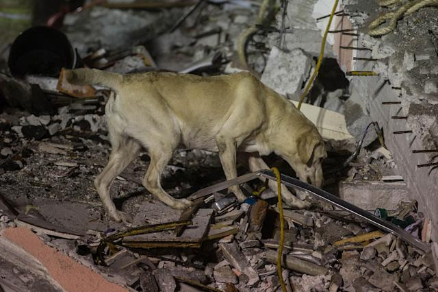 <p>A dog is seen near a debris of a building after a powerful magnitude 7.1 earthquake that hit Mexico City, Mexico on September 21, 2017. (Photo: Daniel Cardenas/Anadolu Agency/Getty Images) </p>