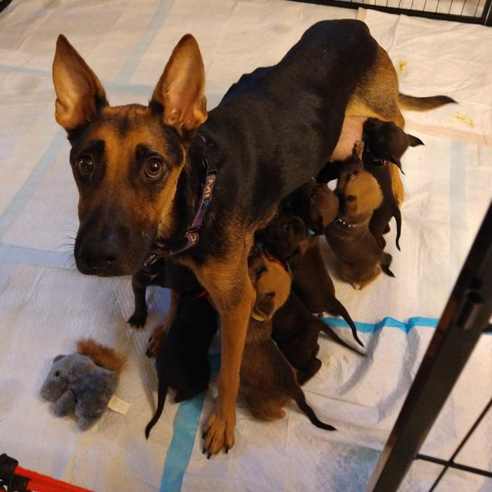 A dog and her puppies (Mutts of the Midway / Best Friends Animal Society)