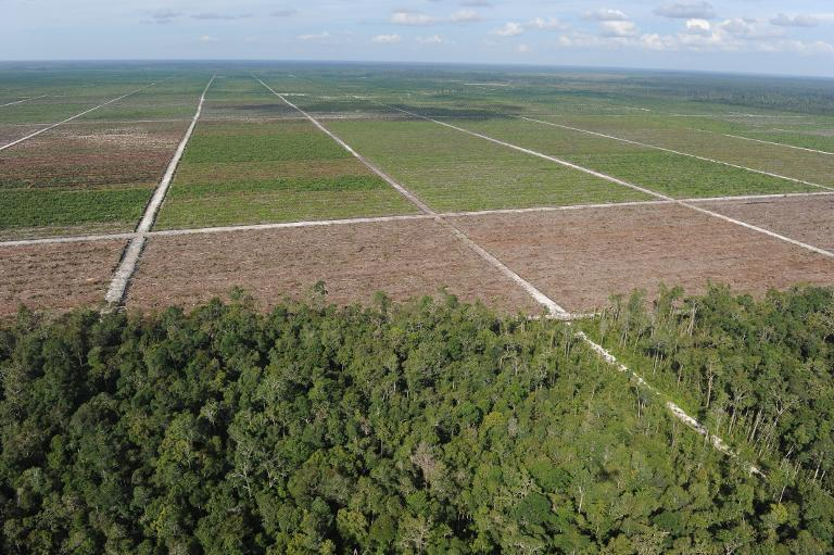 Treeline of remaining rainforest, seen to a newly developed palm oil plantation over cleared tropical forest land in Central Kalimantan province on Indonesia's Borneo island, on June 7, 2012