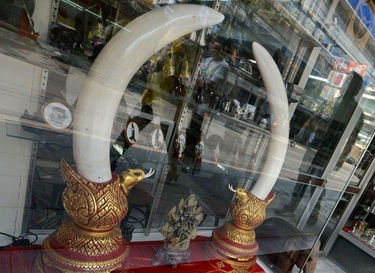 People walk past ivory tusks on display at an antique and ivory store in Bangkok on February 28, 2013. African elephants face the worst crisis since global trade in ivory was banned almost a quarter-century ago, with the risk of extinction rising in worst-hit nations, conservationists said Wednesday
