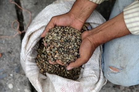 A man displays coffee beans, used for bartering, on a street in Guarico