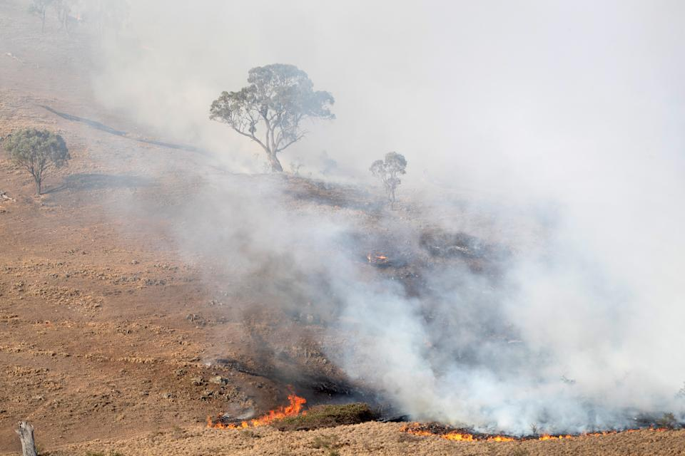 BUMBALONG, AUSTRALIA - FEBRUARY 03: A bushfire sweeps up a hillside on February 3, 2020 in Bumbalong, Australia. In many fire affected areas, surviving wildlife are suffering from dehydration and near starvation, due to the widespread habitat destruction and continued drought. (Photo by John Moore/Getty Images)