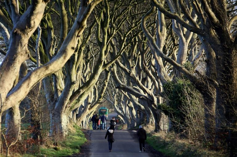 In this file picture, people walk along the Dark Hedges tree tunnel, which was featured in Game of Thrones, near Ballymoney in County Antrim, Northern Ireland