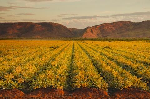 Crop fields in the Kununurra region of Australia - Credit: JOHN CRUX PHOTOGRAPHY