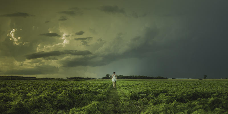 Person in farm with rows of small tobacco plants against a stormy sky.
