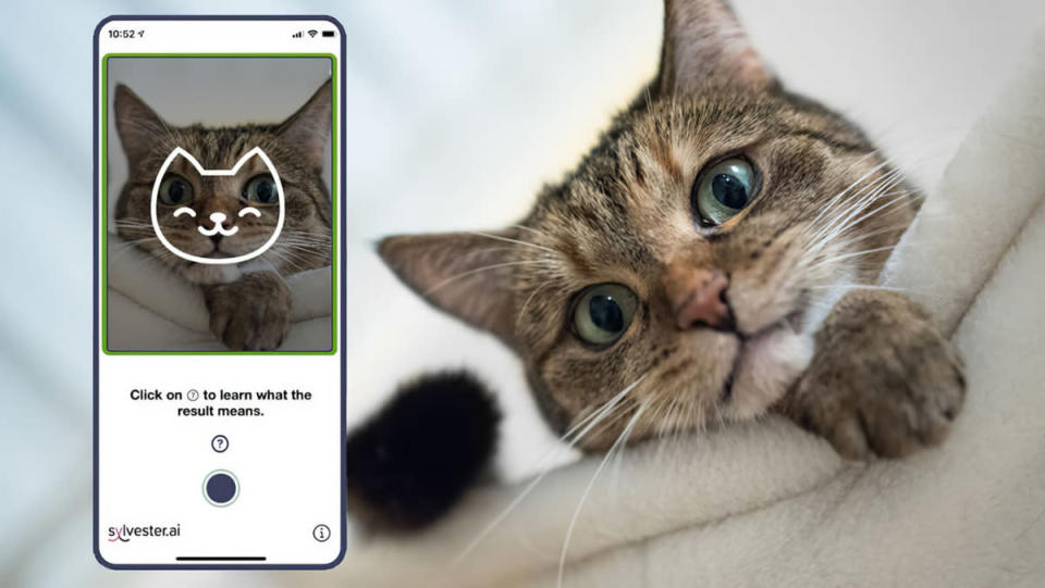 An image of the Tably app on a smartphone next to a real cat.